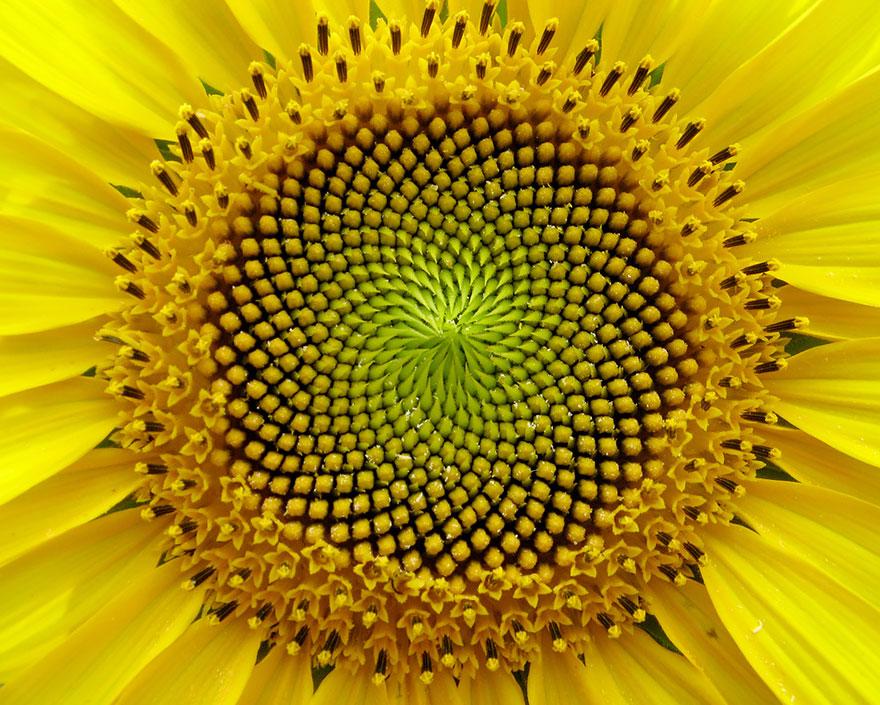 dokonale perfektne fotky kvetov (7)