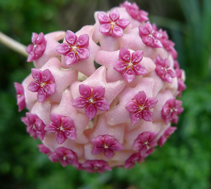 dokonale perfektne fotky kvetov (9)