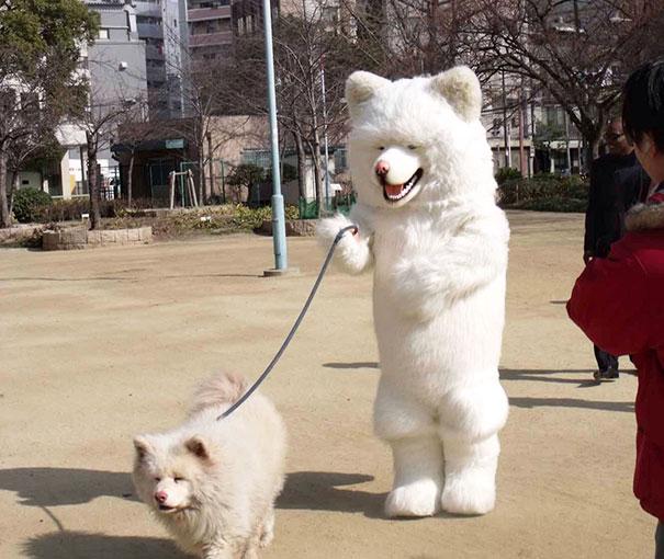 zvieratka ako ich majitelia (2)