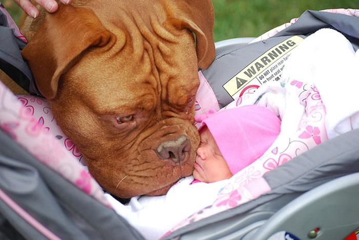 kamarátstvo detí so psami (2)