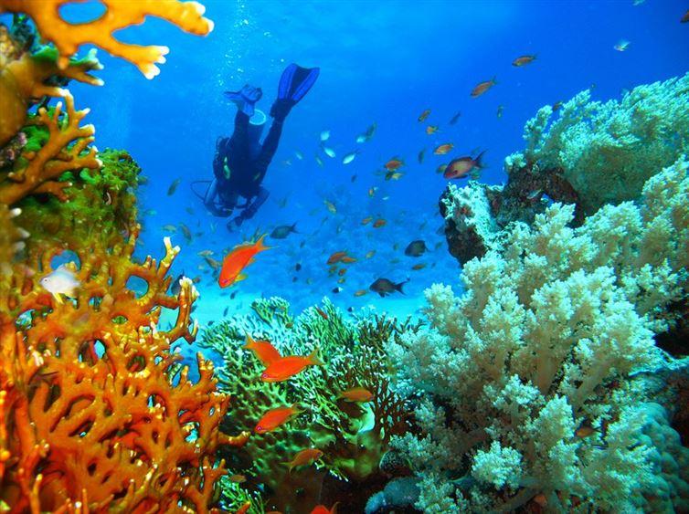 podmorské tajomstvá (7)