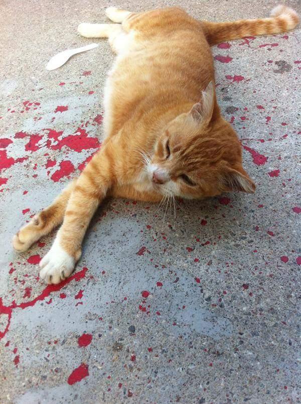 záchrana mačky (3)