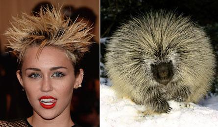 celebrity ako zvieratá (17)