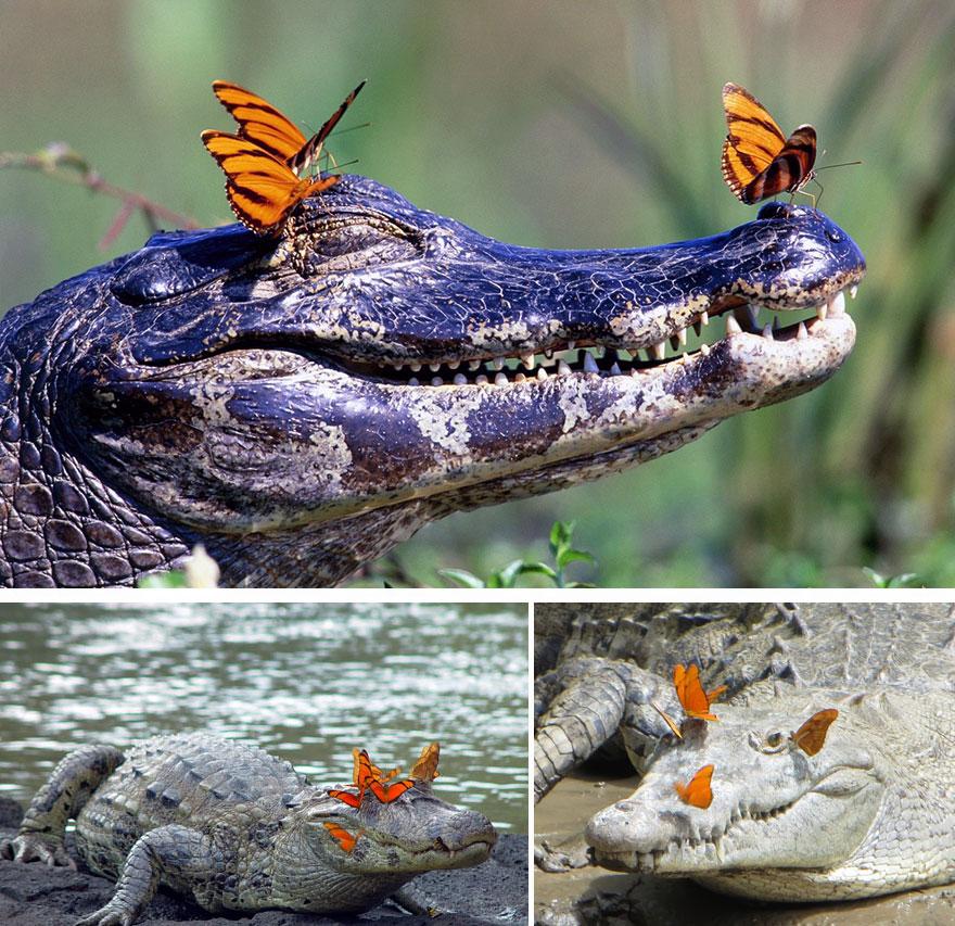 zvierata a motyle (2)