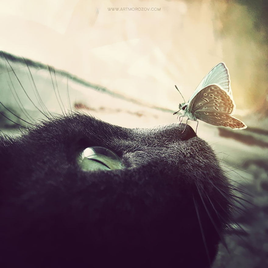 zvierata a motyle (3)