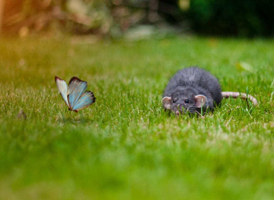 motýle a zvieratá (5)
