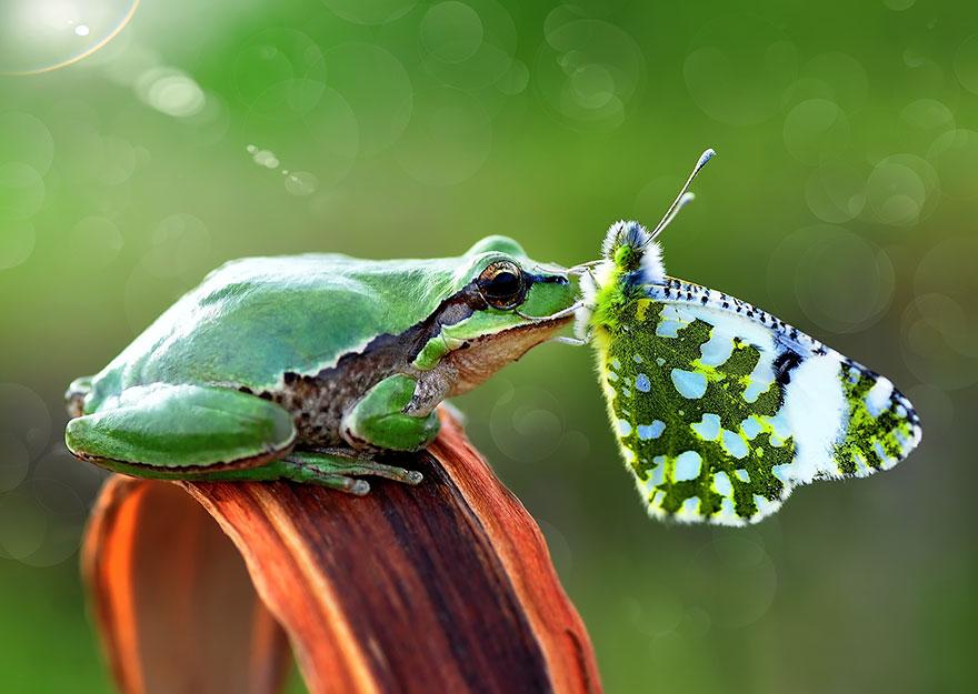 zvierata a motyle (6)