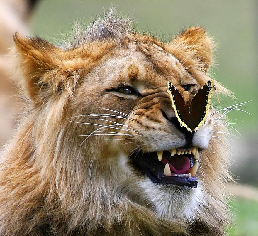 zvierata a motyle (7)