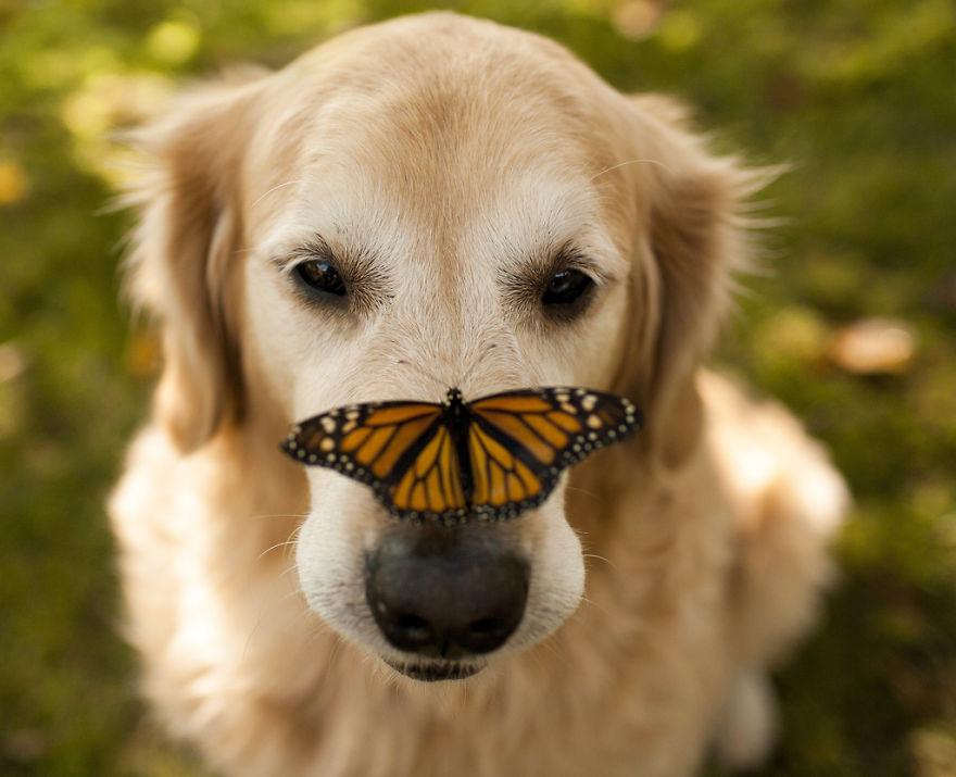 zvierata a motyle (8)