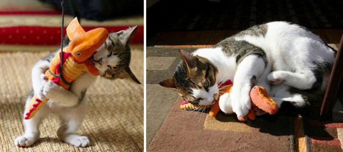 zvieratka vyrastaju s hrackami (1)