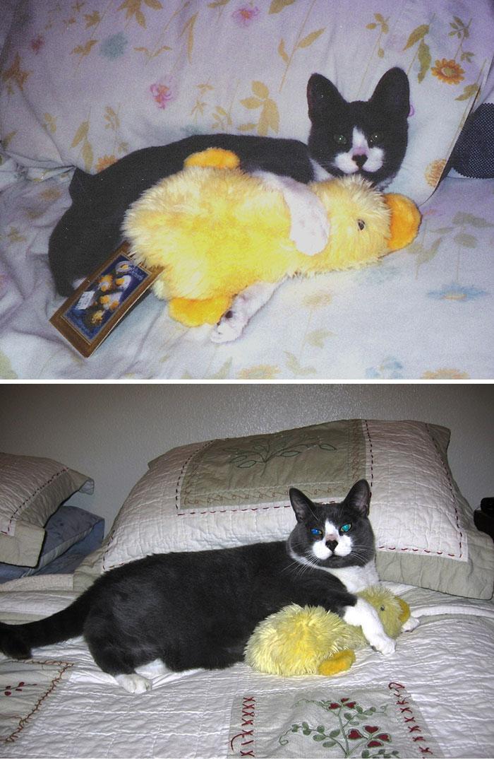 zvieratka vyrastaju s hrackami (10)