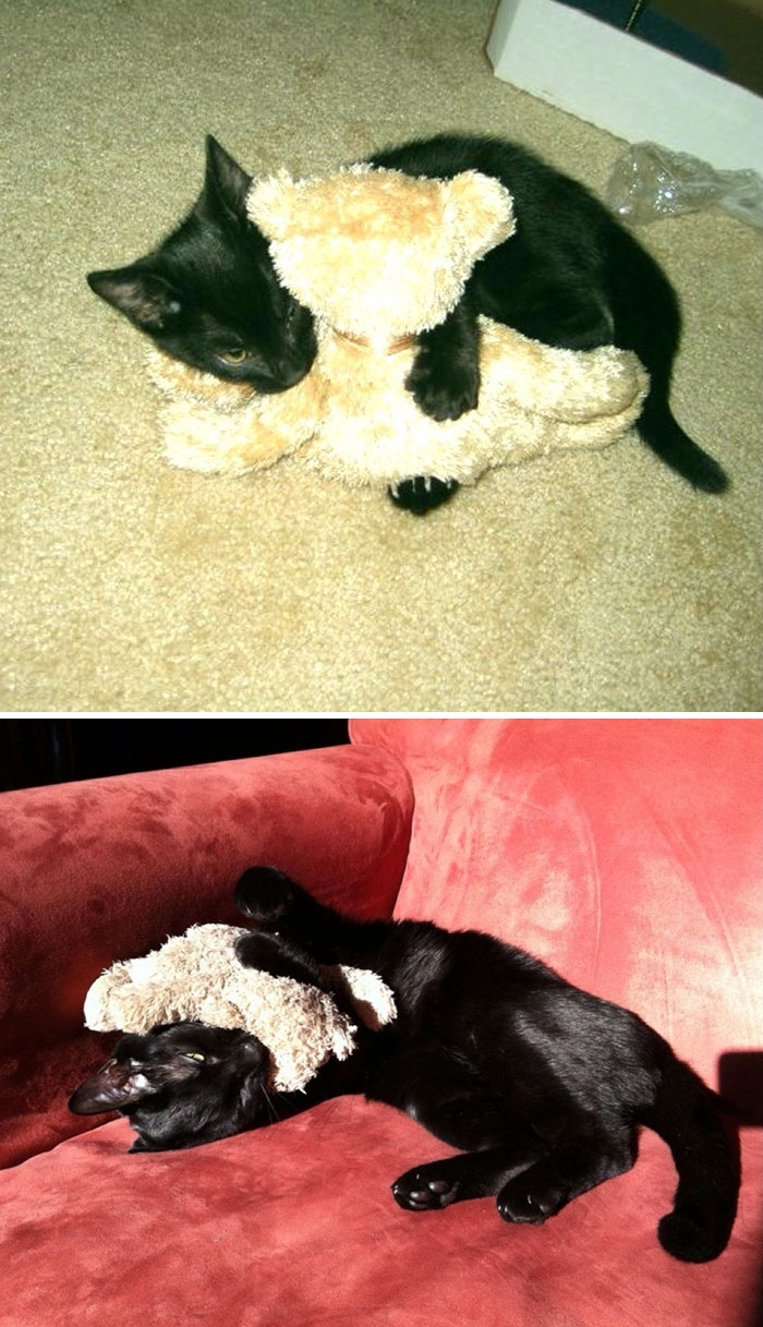 zvieratka vyrastaju s hrackami (12)