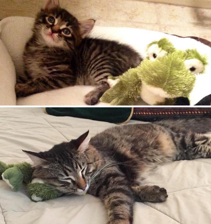 zvieratka vyrastaju s hrackami (15)