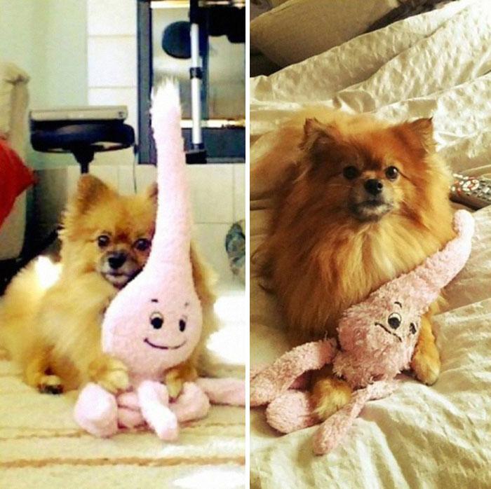 zvieratka vyrastaju s hrackami (18)