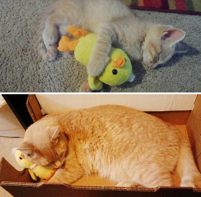 miláčikovia so svojimi hračkami (2)