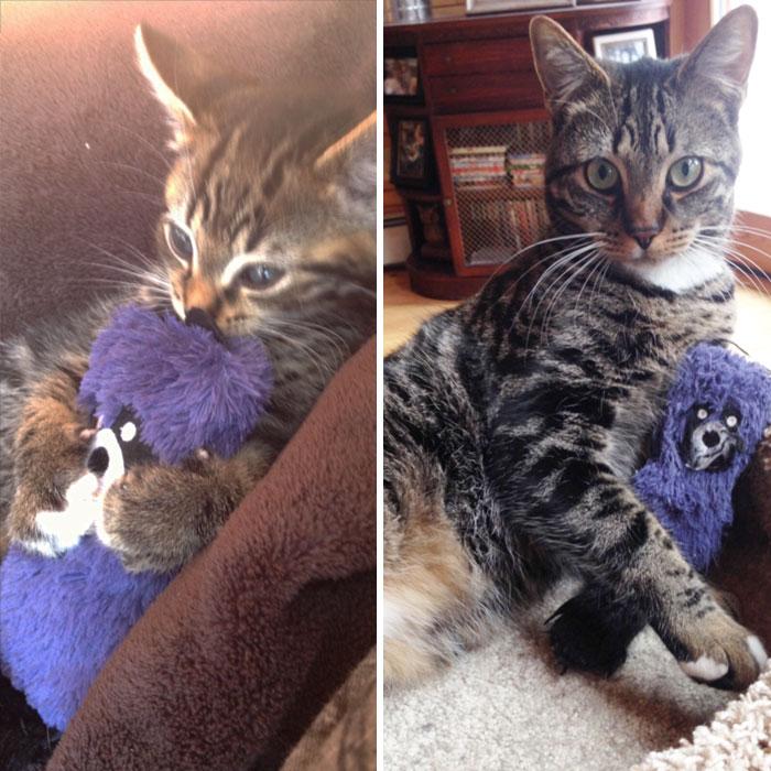 zvieratka vyrastaju s hrackami (20)