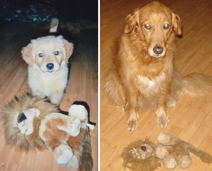 zvieratka vyrastaju s hrackami (21)
