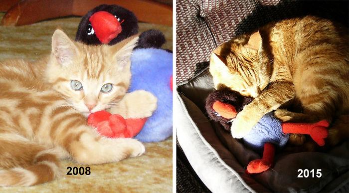 zvieratka vyrastaju s hrackami (5)