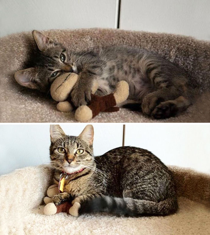 zvieratka vyrastaju s hrackami (7)