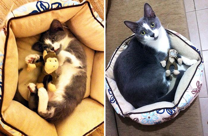 zvieratka vyrastaju s hrackami (9)