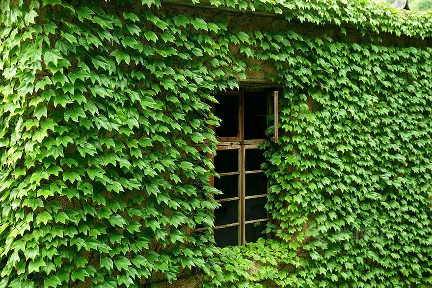 príroda pohltila (11)