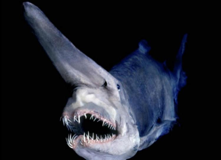 príšery z oceánu (10)