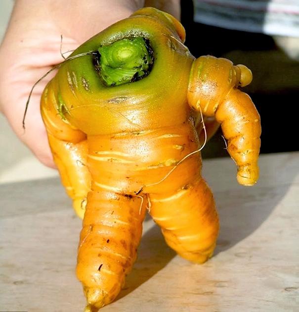 zelenina ovocie (14)