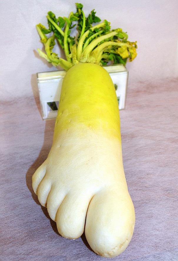 zelenina ovocie (5)