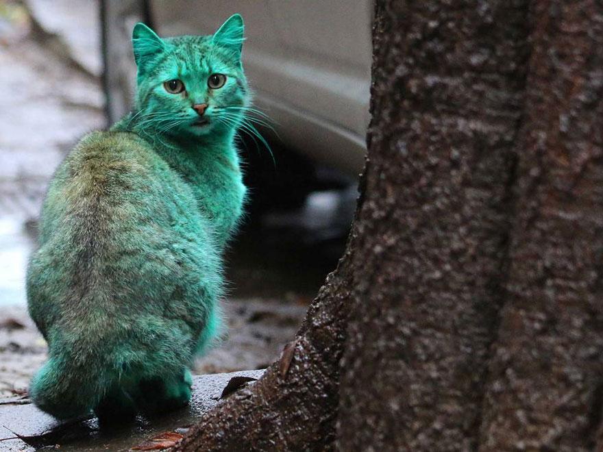 zelena mačka (1)