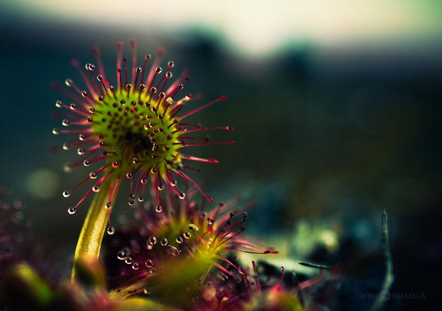 nadpozemska rastlina (2)