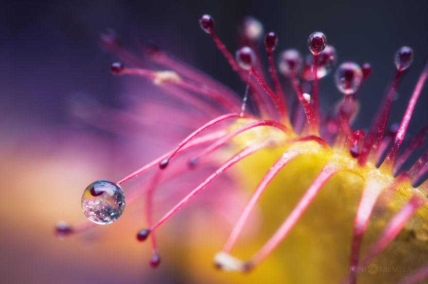 nadpozemska rastlina (3)