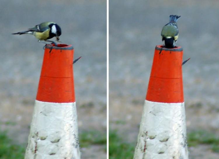 vtáčie hniezda (11)