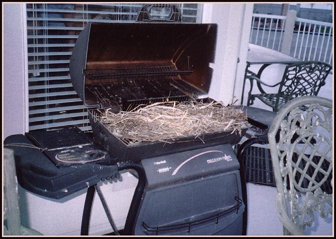 vtáčie hniezda (17)