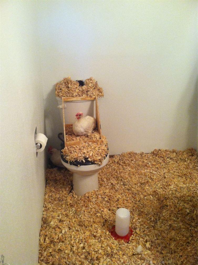 záchodové žartíky (8)