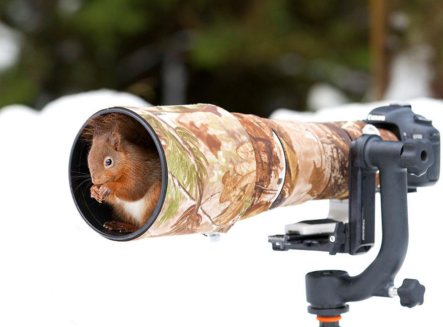 zvieratka fotografi (11)