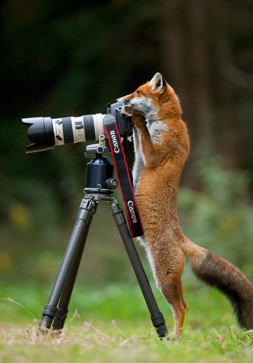 zvieratka fotografi (12)