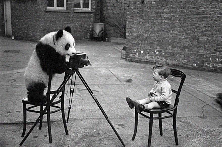 zvieratka fotografi (13)