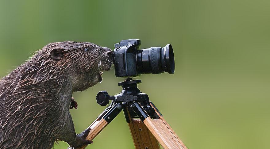 zvieratka fotografi (14)