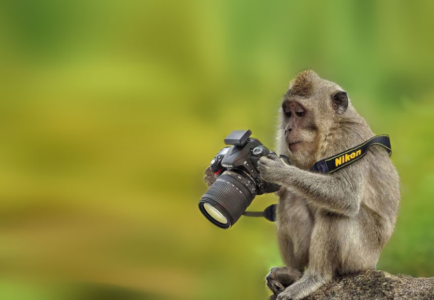 zvieratá fotografi (15)