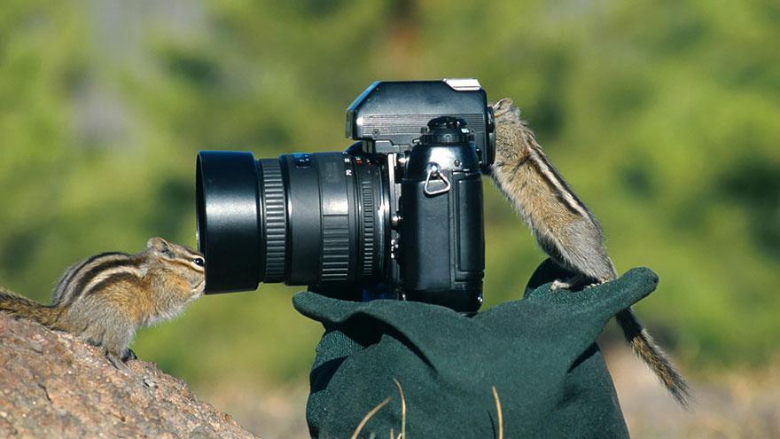 zvieratka fotografi (16)