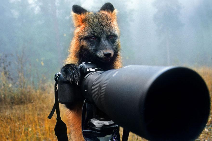 zvieratka fotografi (17)