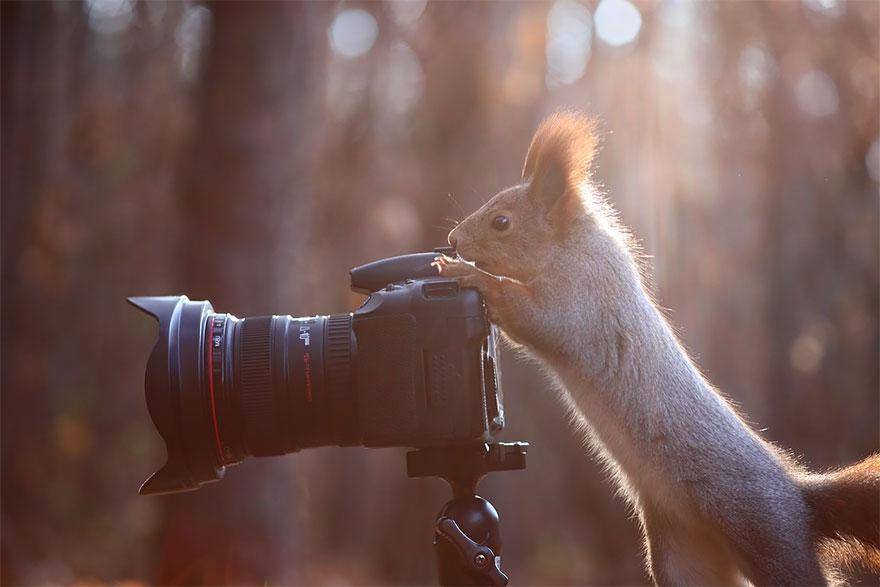 zvieratka fotografi (19)