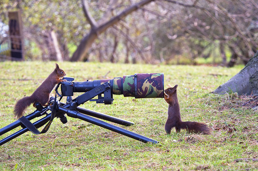 zvieratka fotografi (20)