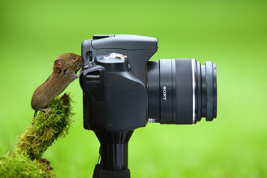 zvieratka fotografi (3)