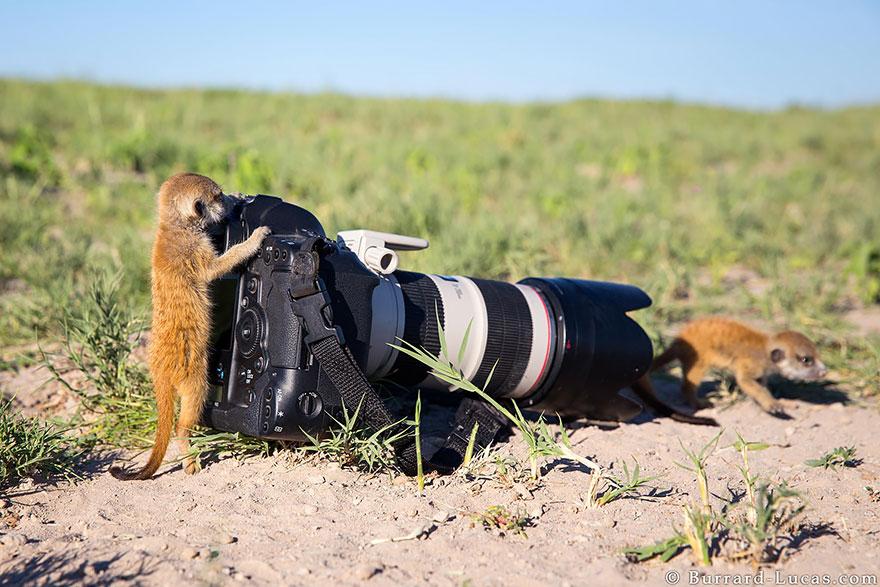 zvieratka fotografi (6)