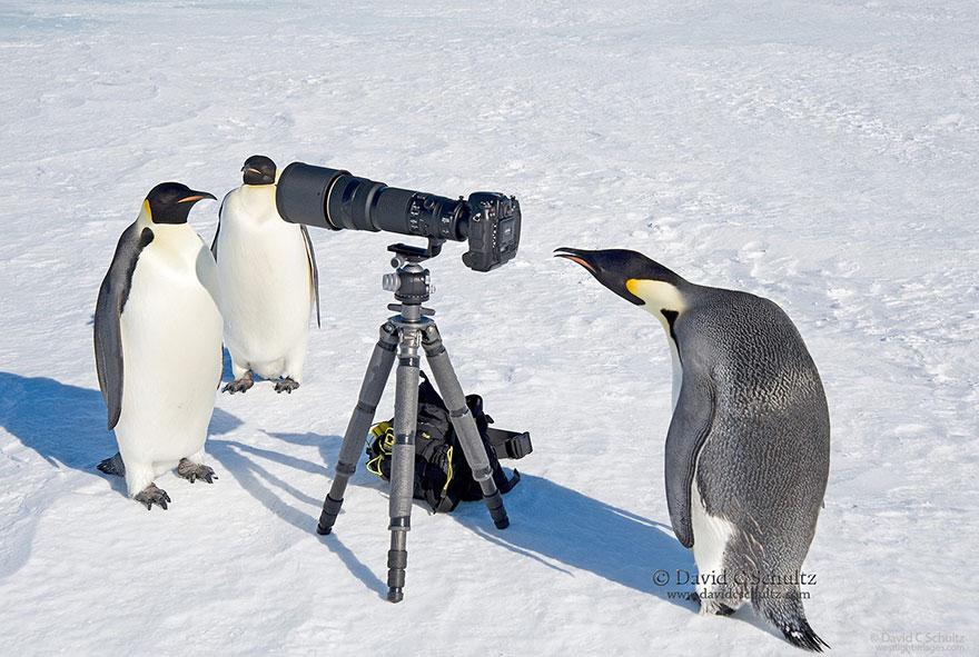 zvieratka fotografi (7)