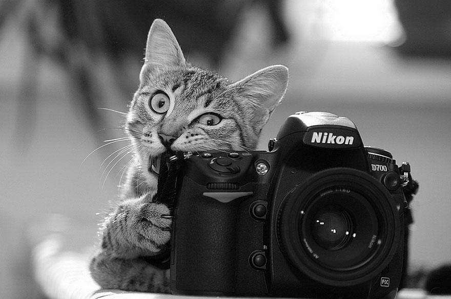 zvieratka fotografi (8)