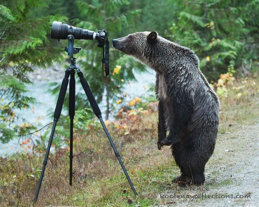 zvieratka fotografi (9)