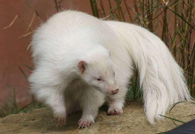 albin22