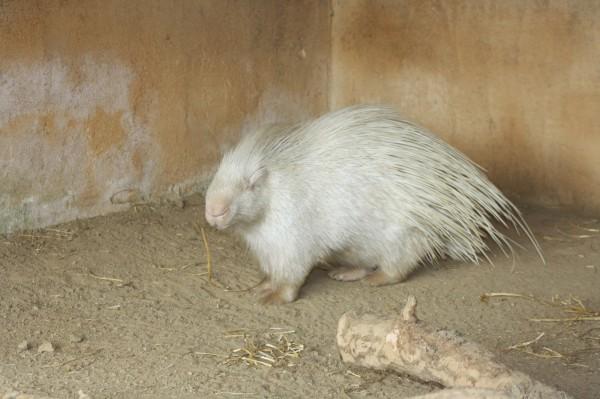 albin27